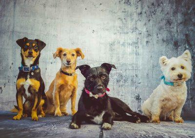Hundeshooting-bei-Bianca-41